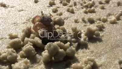 Sand crab on the beach.