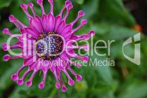 purple flower with spikes