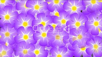 purple wild flower background,violet,flicker,Festivals,bloom,lush,prosperous,welcome,creativity,creative,vj,beautiful,art,decorative,mind,Game,Led,neon lights,modern,stylish,dizziness,romance,romantic,material,stage,music,joy,happiness,happy,young,loop,mo