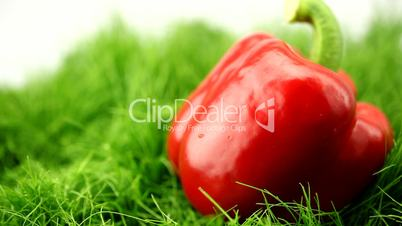 pepper on the grass in the rain