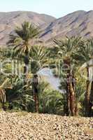 Oasis in South Marocco
