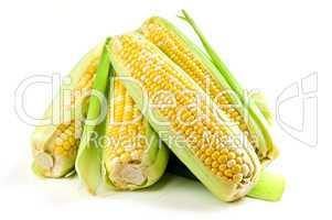 Corn ears on white background