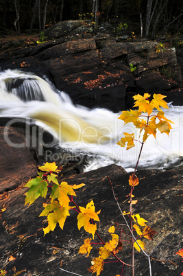 Forest river in the fall