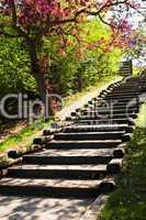 Wooden stairway in a park