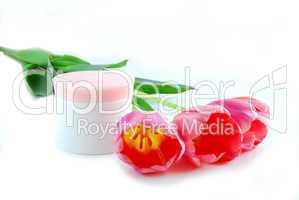 Tulips and cream
