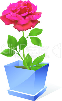 Vector red rose flower in pot om white background