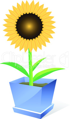 Beautiful sunflower spot concept ilustration on white