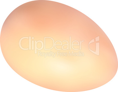 illustration of yellow chicken egg