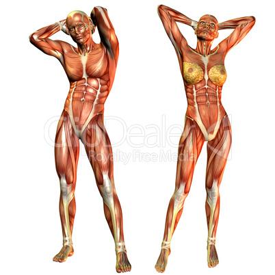 Muskelaufbau Frau und Mann von Vorne: Lizenzfreie Bilder und Fotos