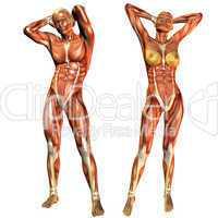 Muskelaufbau Frau und Mann von Vorne