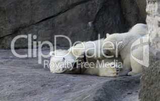 bear cub play in zoo