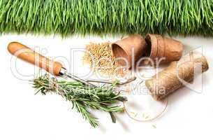 Pflanzzubehör und Rasen