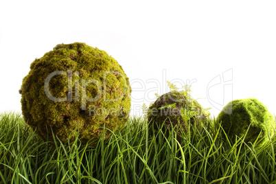 Mooskugeln auf Gras