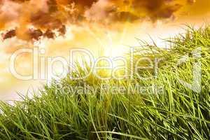 Gras vor dunklem Himmel