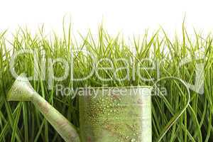 Small watering can with tall grass against white