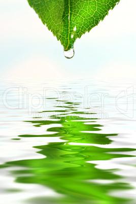 Blatt über Wasser