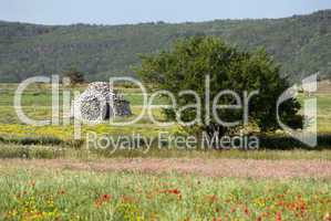 Borie in der Provence