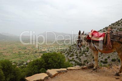 Donkey and Lassithi Plateau view, Crete, Greece