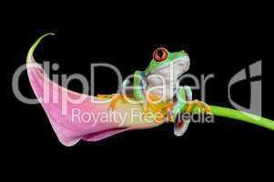 Frosch auf Calla