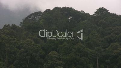 Rain forest logging in Vietnam