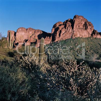 Desert Lanscape