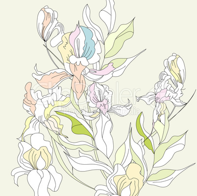 Romantic floral background with Iris flowers