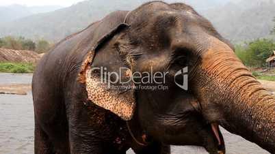 Elefant im Fluss im Elephant Nature Park, Thailand