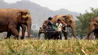 Elefantenherde wird gefüttert im Elephant Nature Park, Thailand