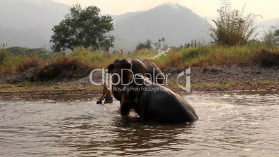 Elefanten beim Baden im Elephant Nature Park, Thailand