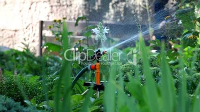 sprinkler pour grass - focus on grass