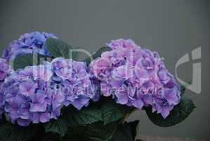 Blumengruss und Hintergrund