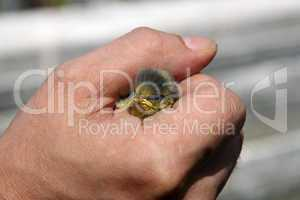 Vogel in der Hand