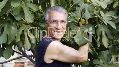 Farmer picking organic fruit from tree - Food - Agriculture