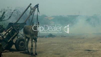 Donkey at Burning Rubbish Dump in Karachi, Pakistan