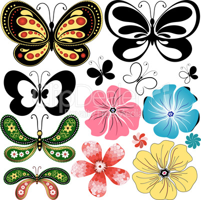 New collection butterflies