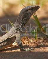 Young Water monitor