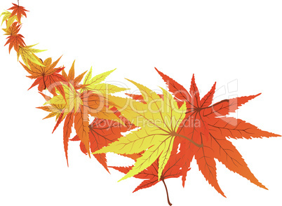 twisted leaves