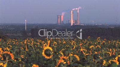 Kraftwerk vor Sonnenblumenfeld