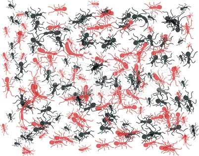 Ameisen,Ants