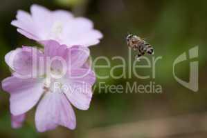 Insekt & Blume