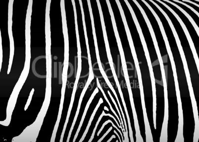 Zebra Hintergrund