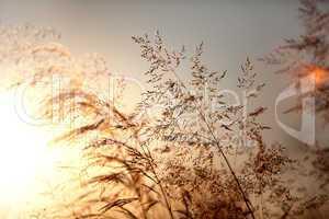 Sommerwiese bei Sonnenuntergang