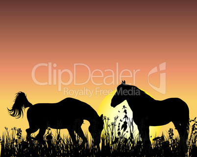 horse on sunset background