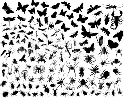vector insects