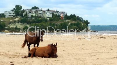 Pair of horses on beach