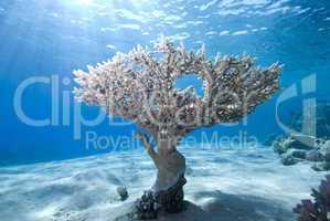 Reef scene and sunbeams
