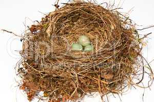 Vogelnest, bird's nest