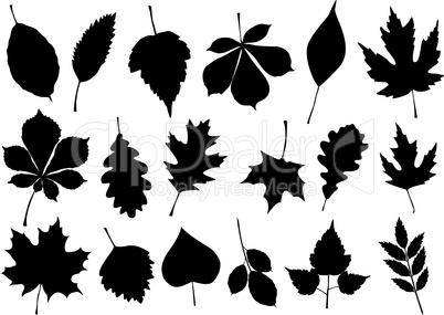 Vector illustration set of 18 autumn leaf silhouettes.