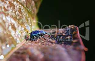 Rüsselkäfer mit Tropfen vom Morgentau auf dem Rücken