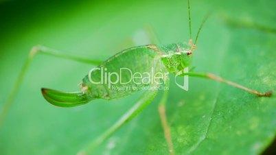 Grashopper Breathing